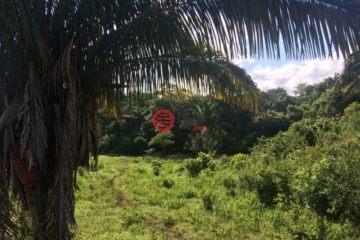 居外网在售巴拿马ArraijánUSD 1,250,000总占地203095平方米的土地
