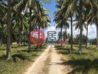瓦努阿图桑马卢甘维尔的商业地产,Coconut Drive ,编号54981417