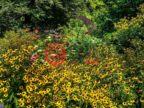 美国宾夕法尼亚州切斯特斯普林斯的农业用地,1165 YELLOW SPRINGS RD,编号61140254