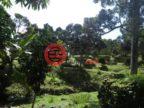 马来西亚吉打州固润的房产,Lot 4978 Jalan Sungai Petani Kampong Panjang Gurun Kedah,编号54969217