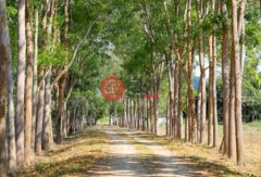 泰国北碧府Ban Kao的土地,Unnamed Road,,编号37677688