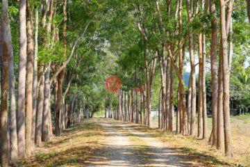 居外网在售泰国Ban KaoTHB 120,000,000总占地31060平方米的土地